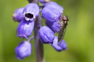 Macro Photography - UK Wildlife