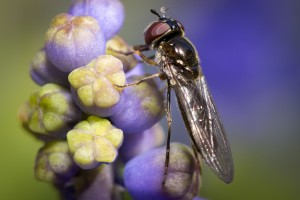 Macro Photography - UK Wildlife