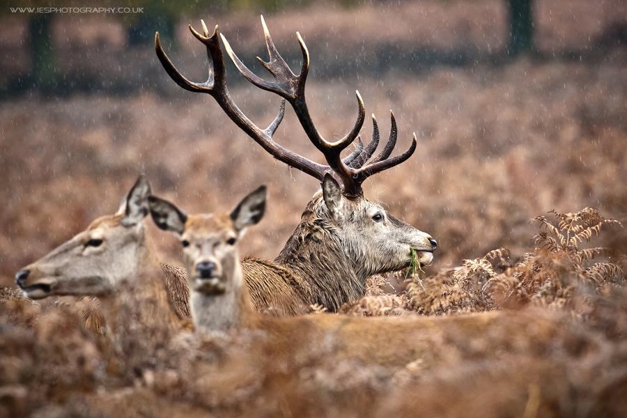 IMAGE: http://www.iesphotography.co.uk/richmond_park_31oct2010_4.jpg